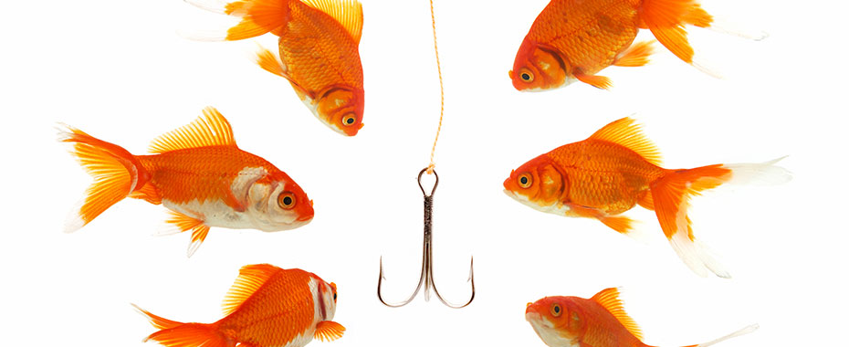 Goldfish surrounding a hook which is like some of the unbelievable offers of website hosting services.