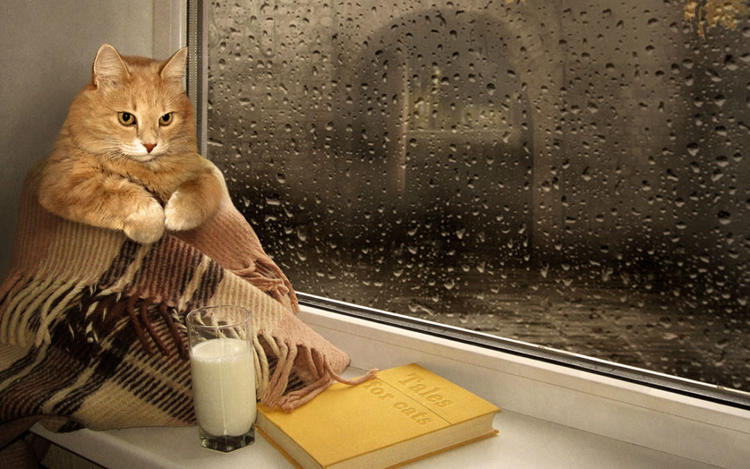 fat orange tabby cat in blanket with glass of milk and book, Tales of the Cat, by rainy window