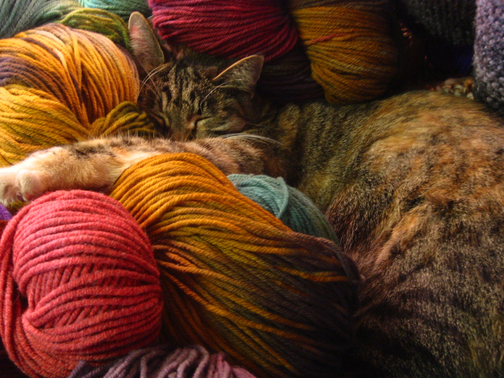 Elsie the Shop Cat asleep in a pile of luxury yarn.